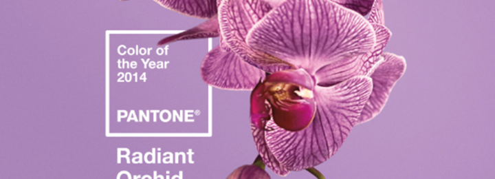 ORCHID – 2014's Color of the Year